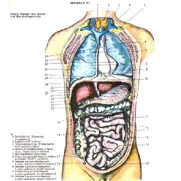 Schulmedizin & Mesologie